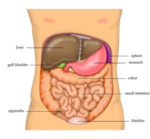 Anatomy_Abdomen_Tiesworks