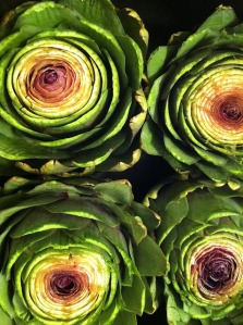 trimmed artichokes ready to cook
