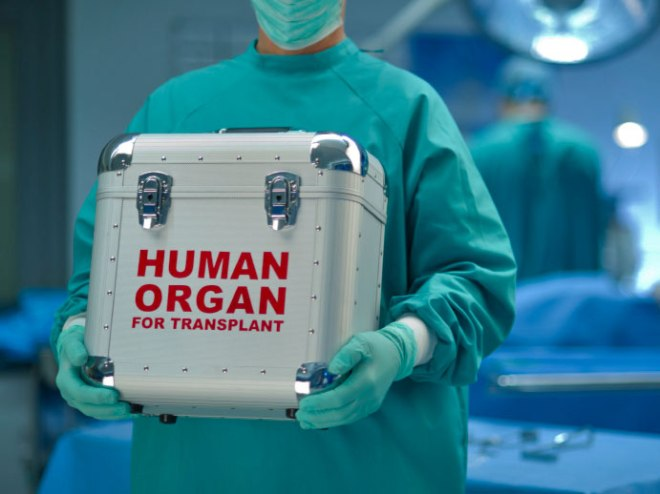 Doctor carrying cooler labeled Human Organ for Transplant