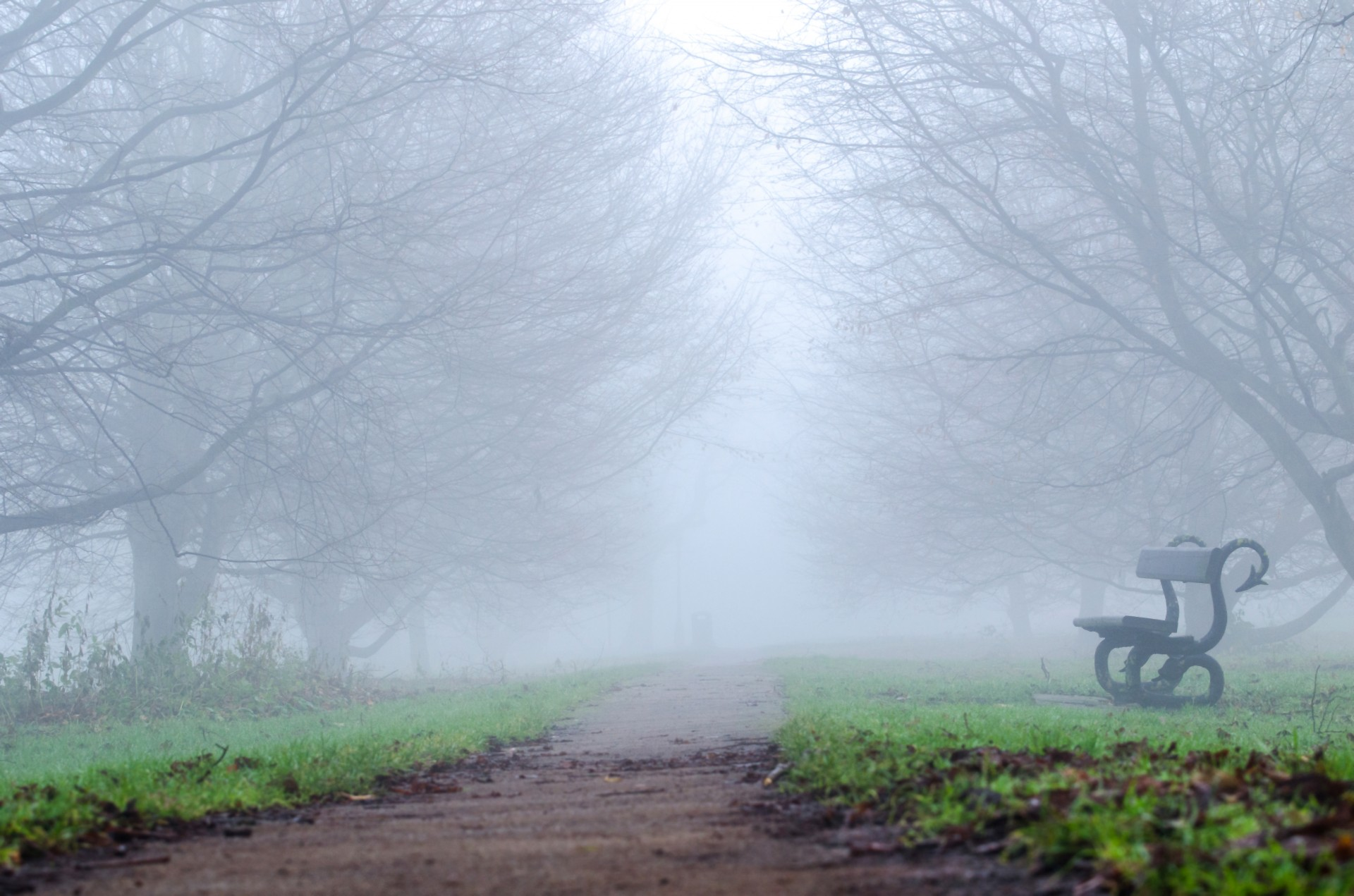 A park in the fall with leafless trees and shrouded in fog. There's a park bench barely visible through the fog