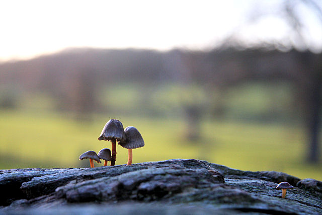 Tiny mushrooms growing on a log