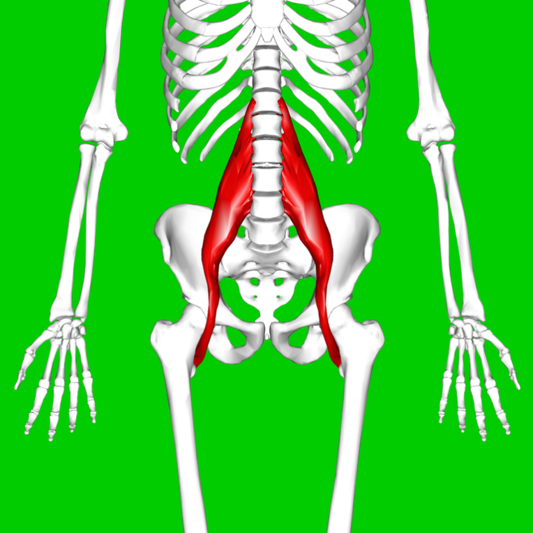 Diagram of the Psoas major muscle