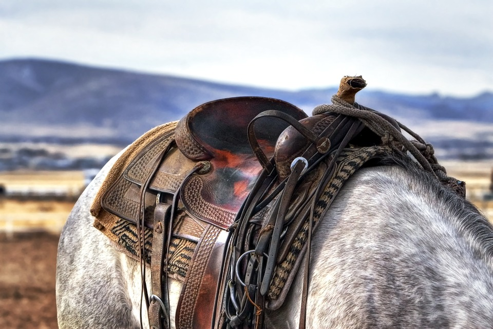 Saddle and blanket on the back of a gray and white horse