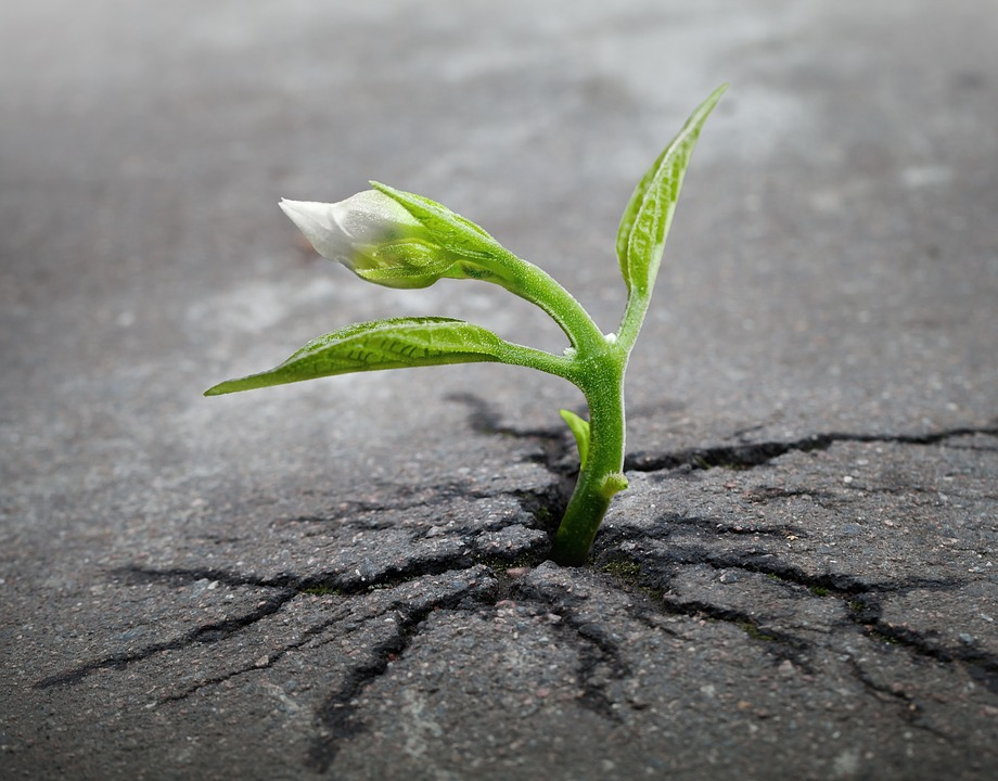 Sprout plant growing through asphalt