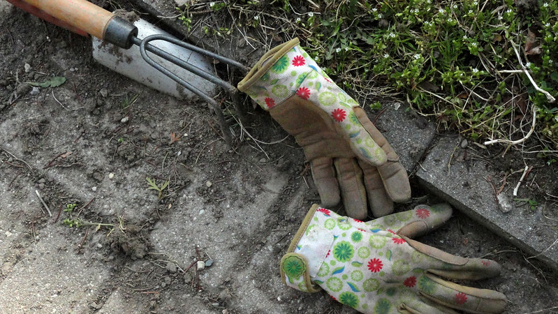Gardening gloves, a small weeding tool, and weeds