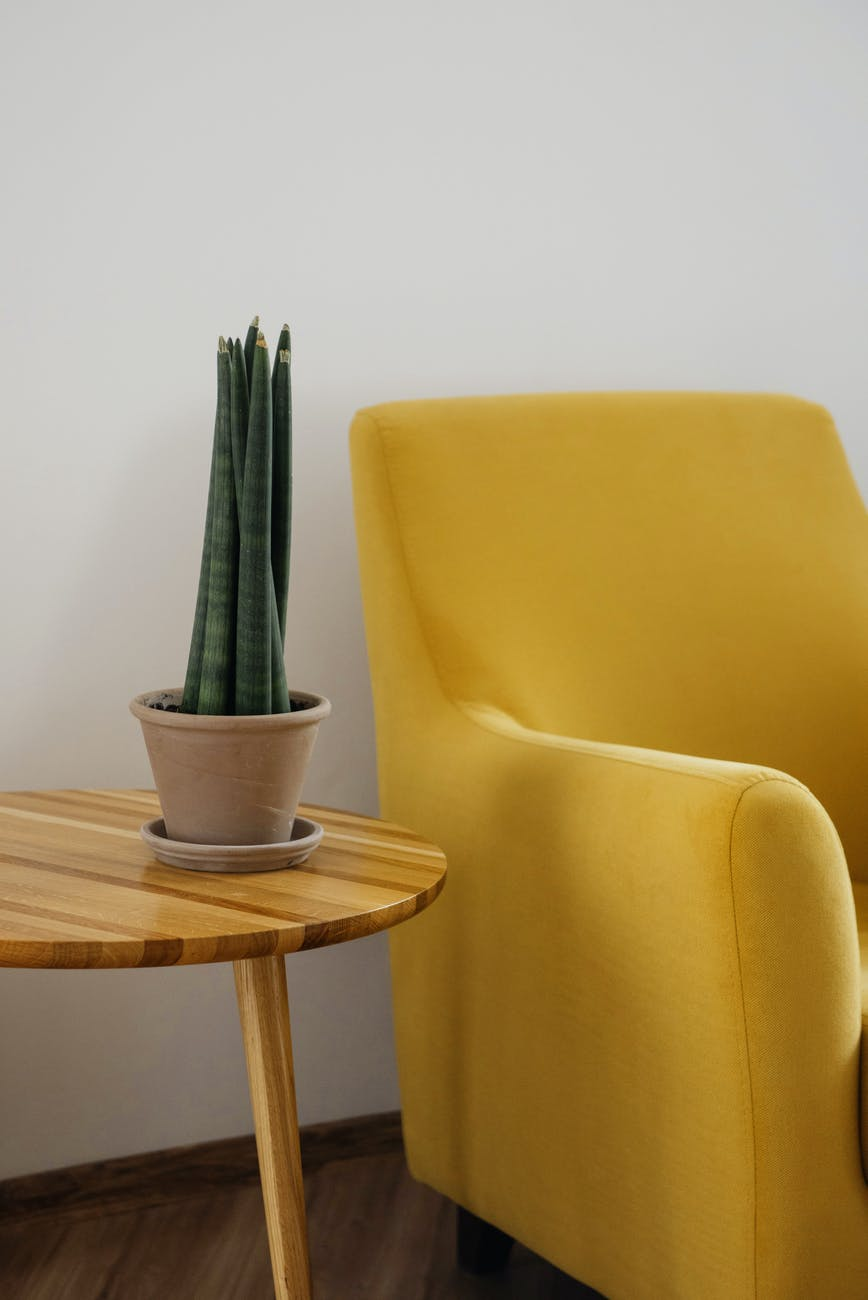 yellow lounge chair next to plant