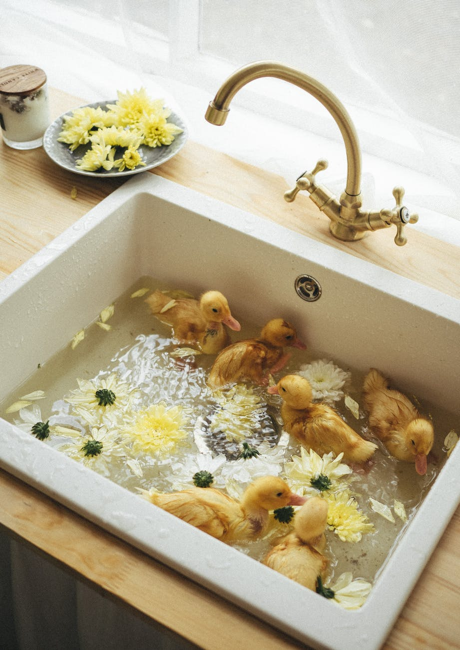ducklings in a sink full of water and yellow daisies